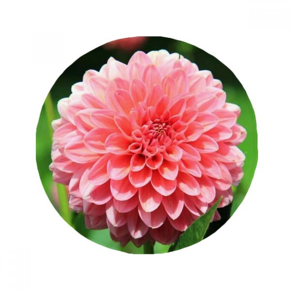60X60cm DIYthinker Peach Blossom Beautiful Flowers Anti-Slip Floor Pet Mat Round Bathroom Living Room Kitchen Door 60 50Cm Gift