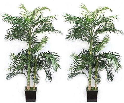 Tropical Areca Palm Tree - 6