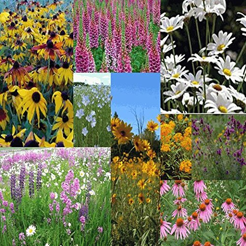 All Perennial Wildflower Seed Mix - 1 Lb