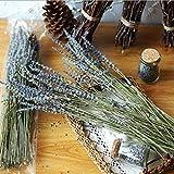 Lavender Bundles- with 200 PCS Lavender