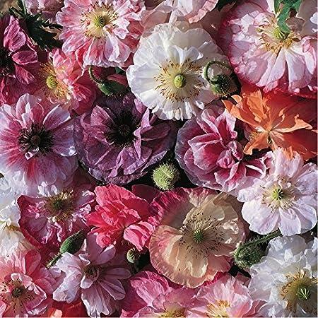 Heirloom 50 Seeds Shirley Poppy