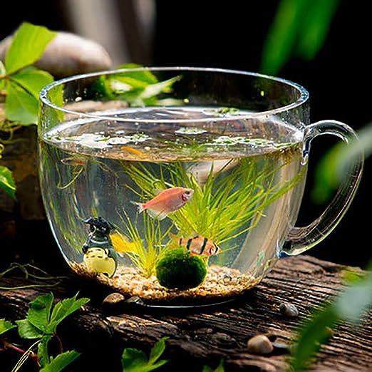 LNTE Acuario, Adorno de Paisaje para pecera Creativa ecológica pequeña Mesa de Cristal pecera: Amazon.es: Productos para mascotas