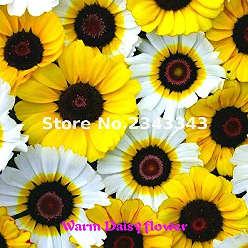 ChinaMarket 100 Pcs/bag Gerbera Yellow Daisy Seeds New Hybrids Mixed Flower Pot Bonsai Plants Easy To Grow For Jardin Garden Flowers Seed -