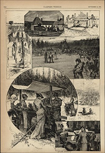 Hops Farming scenes workers in field 1881 vintage newsprint sheet paper