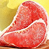 Red Grapefruit Sweet Citrus Maxima Hybrid Seeds 10PCS Tasty Yuzu Tree Organic Home Garden Hardy Fruits