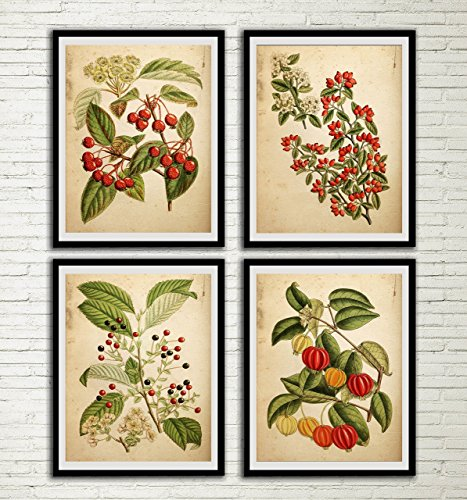 Vintage Red Flower Print Set Red Flower Botanical Art Antique Fern Book Wall Decor Fern Leaf