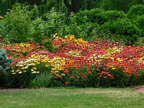 Grow Light Garden Propagator in US - 8