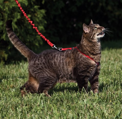 PetSafe Come With Me Kitty Harness and Bungee Leash, Harness for Cats, Large, Red/Cranberry