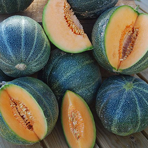 (Melon Petit Des Rennes USDA Certified Organic Vegetable Seed - 1,000 Seeds)