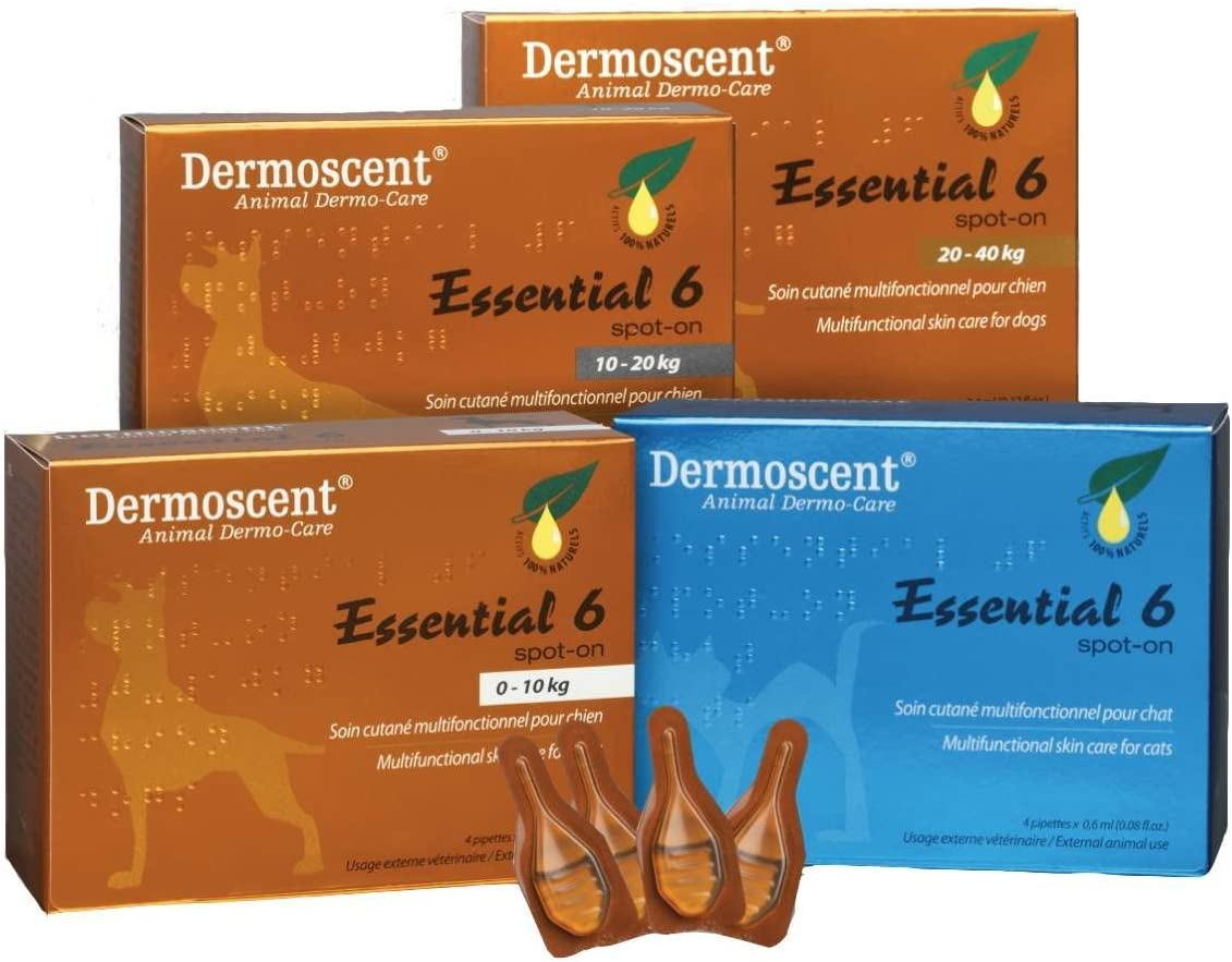 Bayer Dermoscent Essential 6 Spot On Skin Care for Cats Pet Itch Remedies : Pet Supplies