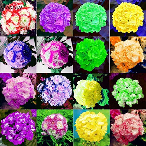 Portal Cool Look ~@-@~ Many, Many Mixed Colors-Hens and Chicks Succulent Mix 50 Seed Garden