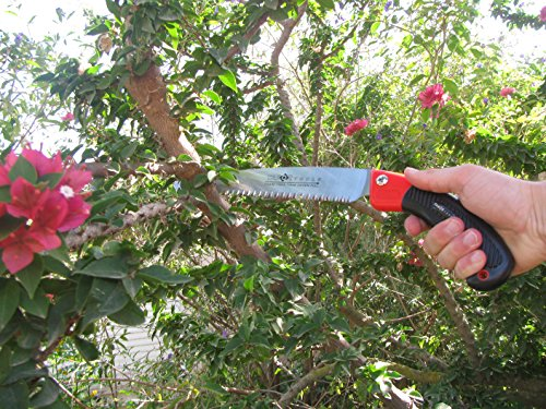 TABOR TOOLS TTS31 Pruning Saw with Sheath For Trimming Tree Branches & Clearing Forest Trails, 8'' Straight Steel Turbocut Pull-Action Blade, Your Next Professional Pruning Tool! by TABOR TOOLS (Image #3)