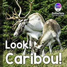 Look! Caribou! (Look! Animals! Concept Books for Babies and Toddlers)