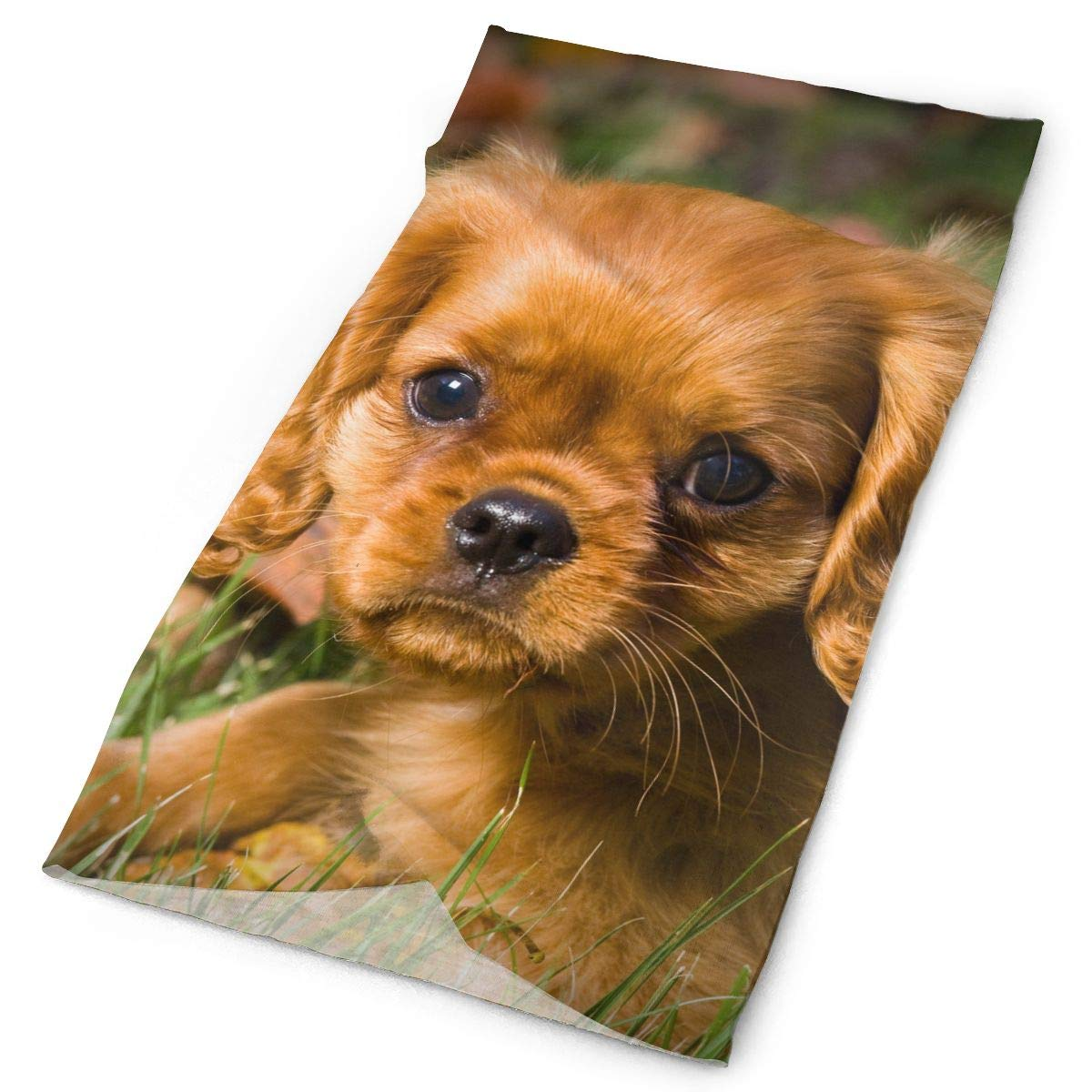 Cavalier Charles Spaniel Unisex Fashion Quick-Drying Microfiber Headdress Outdoor Magic Scarf Neck Neck Scarf Hooded Scarf Super Soft Handle