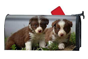 Amazoncom Border Collie Puppies Personalized Mailbox Cover