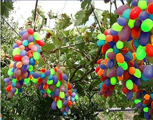 grape seedlings - 8