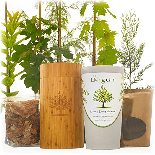 The Living Urn for People. Cremation Funeral Urn for Humans Including a Premium Tree Seedling. Grow a Living Memory Tree from the Ashes of a Loved One. 100% Biodegradable. by The Living Urn for People