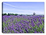 Avignon Lavender - Indoor/Outdoor Art - Weatherprint Patio Art