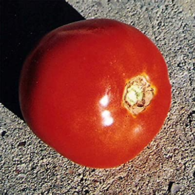 Tomato Garden Seeds - Thessaloniki - Non-GMO, Heirloom, Vegetable Gardening Seed