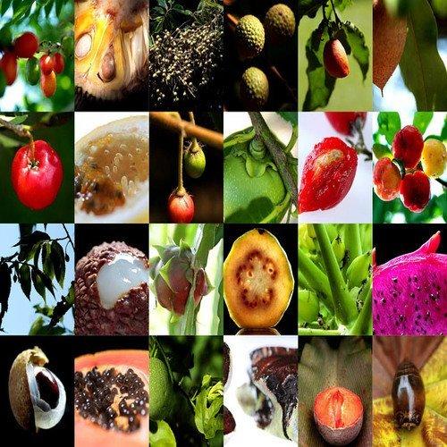 0 Rare Fruits Seeds) (Exotic Fruit)