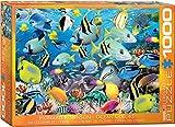 1000 piece fish puzzles - EuroGraphics Ocean Colors Jigsaw Puzzle (1000-Piece)