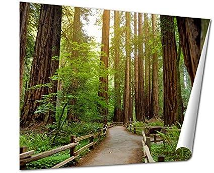 Amazon Com Ashley Giclee Fine Art Print Hiking Trails Through