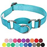Training Dog Collar - Blueberry Pet 19 Colors Safety Training Martingale Dog Collar, Medium Turquoise, Small, Heavy Duty Nylon Adjustable Collars for Dogs