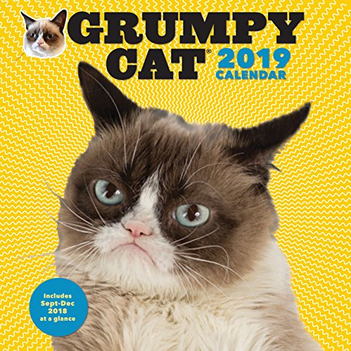 2019 Funny Animal Calendars Kritters In The Mailbox