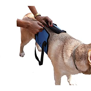 Arnés de Perro, AntEuro Sling Ayuda a los Perros con Piernas Débiles Levántate, Caminar, Subir Escaleras y Entrar en los Coches (Azul): Amazon.es: Deportes ...