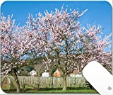 Luxlady Gaming Mousepad 9.25in X 7.25in IMAGE: 26711823 Almond Blossom at german Wine Route in Palatinate Germany