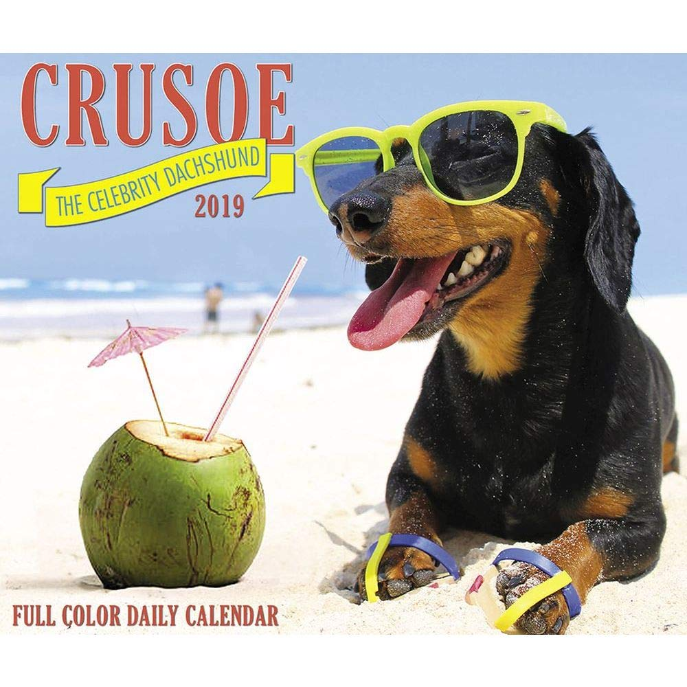 Crusoe セレブリティダックスフント 2019 デイリーデスクボックスカレンダー   B07K4TQ5PV