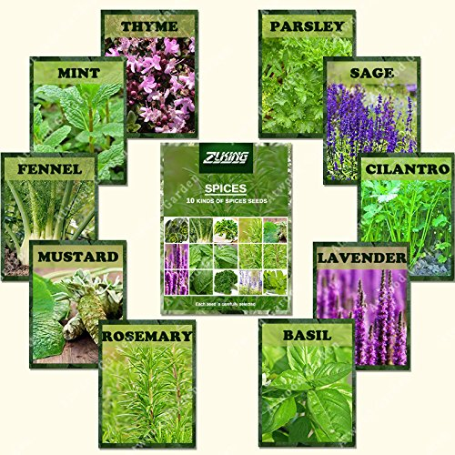 ZLKING 1100 Spice Combo Mix Flower Seeds Herb Vegetable Seed 100% Organic Non GMO Heirloom Bonsai Seeds For Gardening Planter