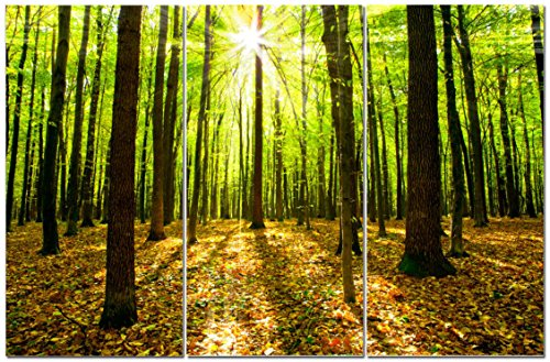Canvas Wall Art Decor - 12x24 3 Piece Set  Tree Forest Lands
