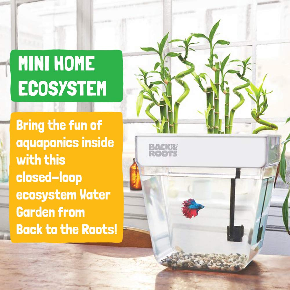 Back to the Roots Self Cleaning Aquaponic Betta Fish Tank Kit for Kids, with STEM Curriculum by Back to the Roots (Image #2)
