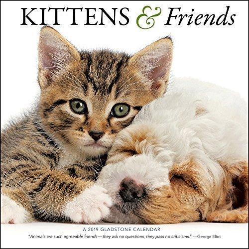 2019 Kittens & Friends Wall Calendar (Calendar Friends)