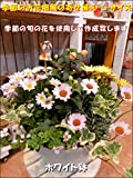 季節の寄せ植え お花畑♪旬のお花たちを使用してデザイナーおまかせで作成致します♪S-サイズ プラスチック製で軽量化♪おまかせピック付き♪この季節の最新バージョン♪玄関に飾って季節を感じれる♪お誕生日のお祝いやプレゼントにも♪