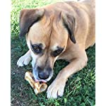 61YCkvMHrAL. SS150  - Made in USA Natural Marrow Filled Bone Chew