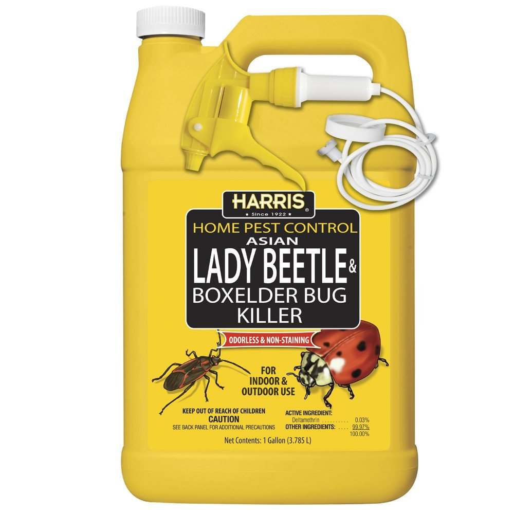 Harris Asian Lady Beetle and Box Elder Killer, Liquid Spray with Odorless and Non-Staining Extended Residual Kill Formula (Gallon)