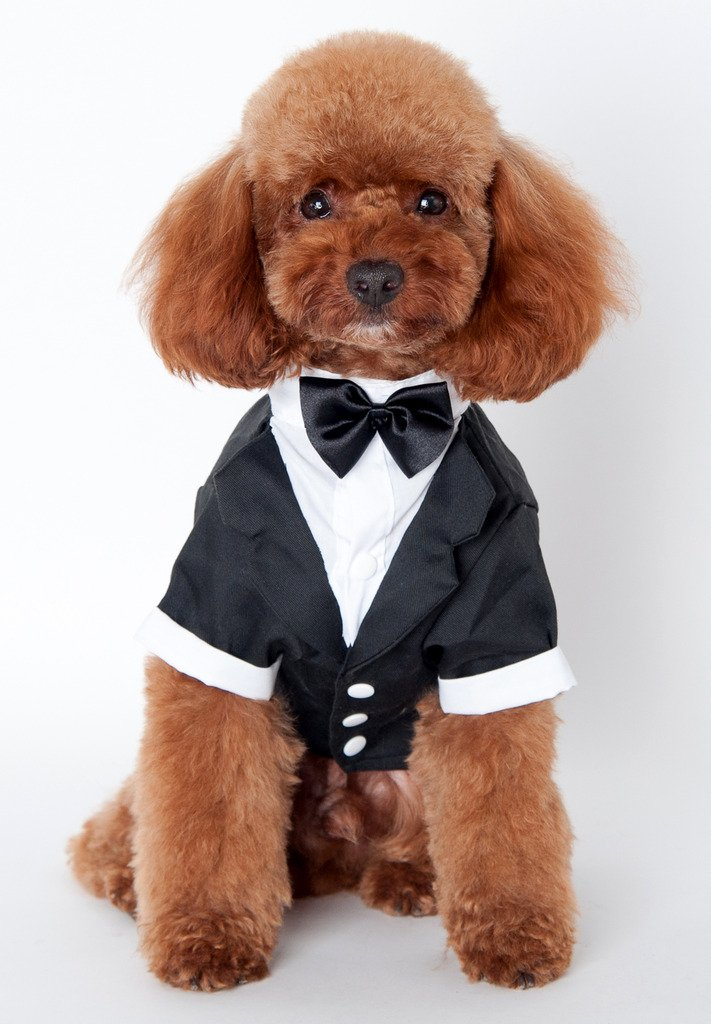 Amazon.com : Pet Leso Black Dog Tuxedo Suit Puppy Wedding Clothes ...
