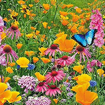 Russian Lawn Butterfly Paradise, Lawn Seeds Blooming from Russia : Garden & Outdoor