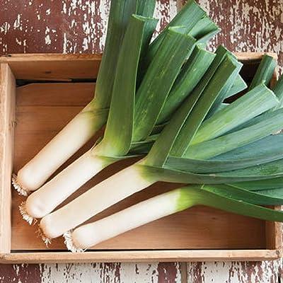 David's Garden Seeds Leek Tadorna SL4782 (Green) 100 Non-GMO, Organic Seeds : Garden & Outdoor