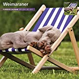Cheap Magnet & Steel Weimaraner 2015 Wall Calendar