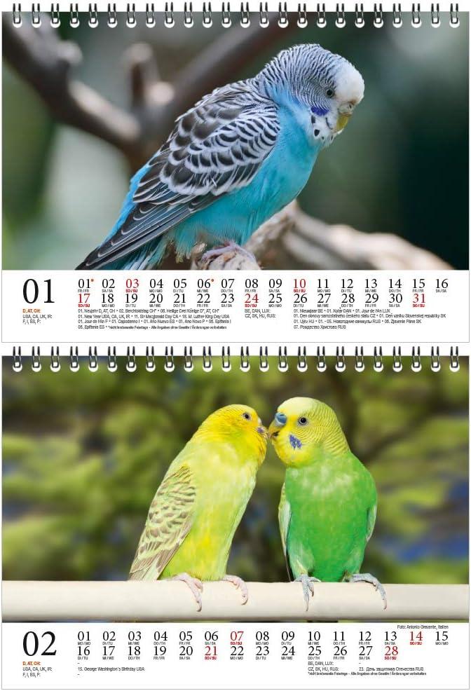 Geschenkset Inhalt: 1x Kalender Wellensittichzauber DIN A5 Tischkalender f/ür 2021 Wellensittiche 1x Weihnachtskarte insgesamt 2 Teile