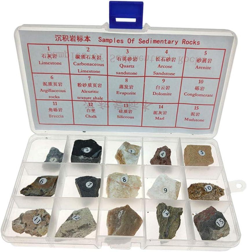 Baoblaze 15 Unids Caja de Colección de Minerales de Rocas Sedimentarias Exhibición Decoración para Hogar: Amazon.es: Juguetes y juegos