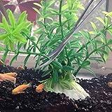 Modiok Aquarium tools, Aquatic Plants Stainless Steel Tool - 4 in 1 Aquascaping Tweezers Scissors Spatula Cleaning Tool Set for Fish Starter Kits & Aquariums Tank Plants Kit