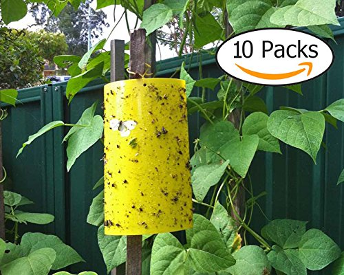 Trapro Yellow Dual-Sided Sticky Fly Traps for Aphids, Fungus Gnats, Leaf Miners and White Flies and Bugs ¬C 10pcs