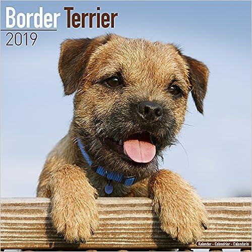Border Terrier Calendar 2019