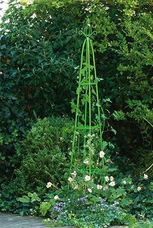 plante grimpante hauteur 2m
