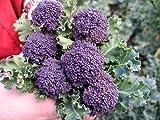 Santee Broccolini 25 Seeds - Mini Purple Broccoli