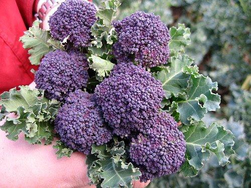 Santee Broccolini